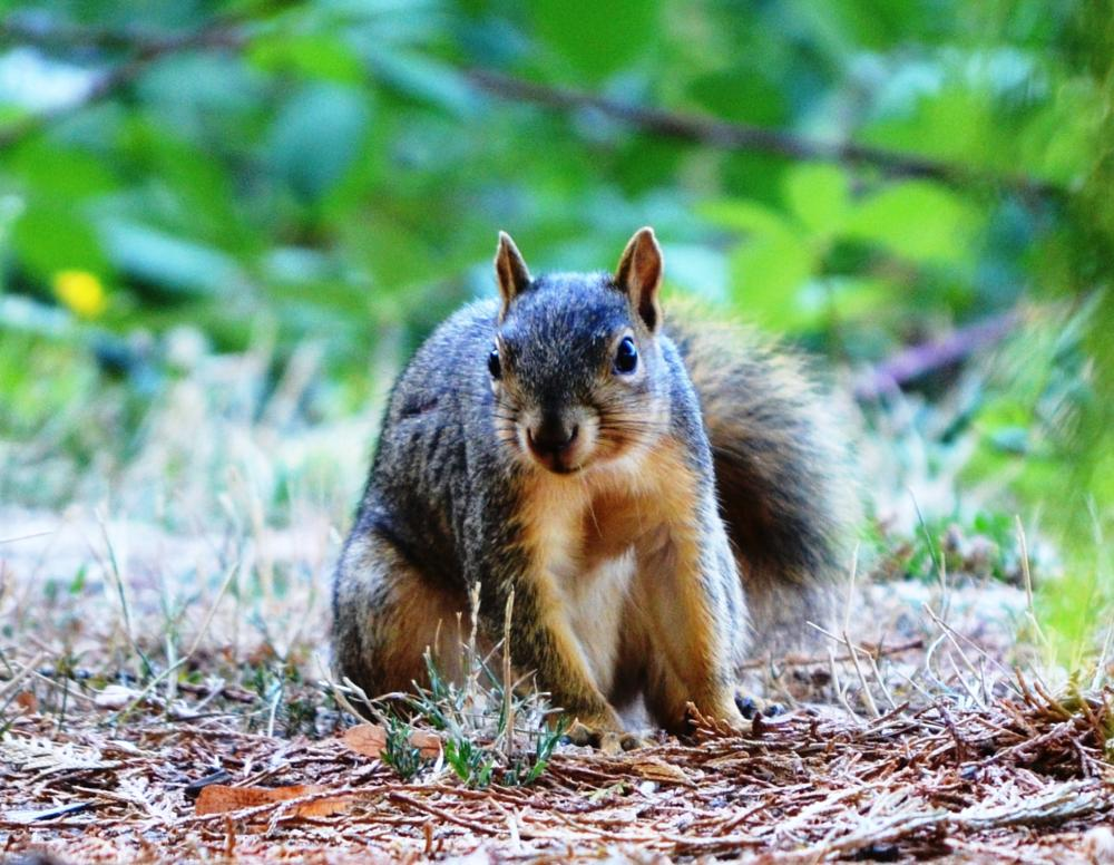 Photo in Nature #squirrels #curious #hungry