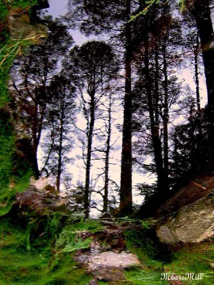 Photo in Rural #water #reflection #trees #stones #puckglen #scotland #argyll #sky #moss