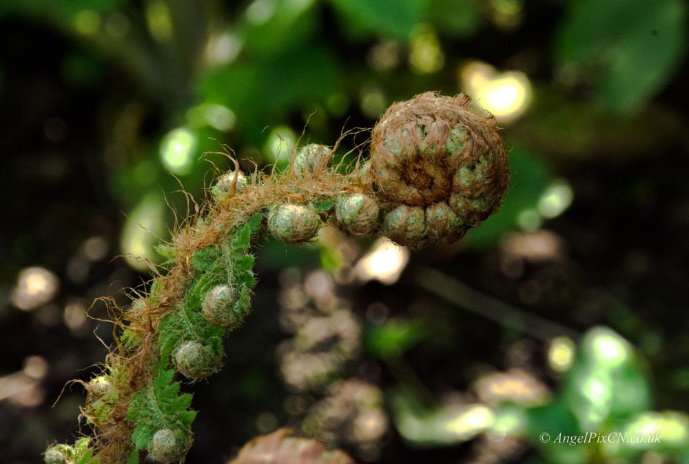 Photo in Macro #flower #green #nature #macro #growth #brown #angelpixcn #nikond7100