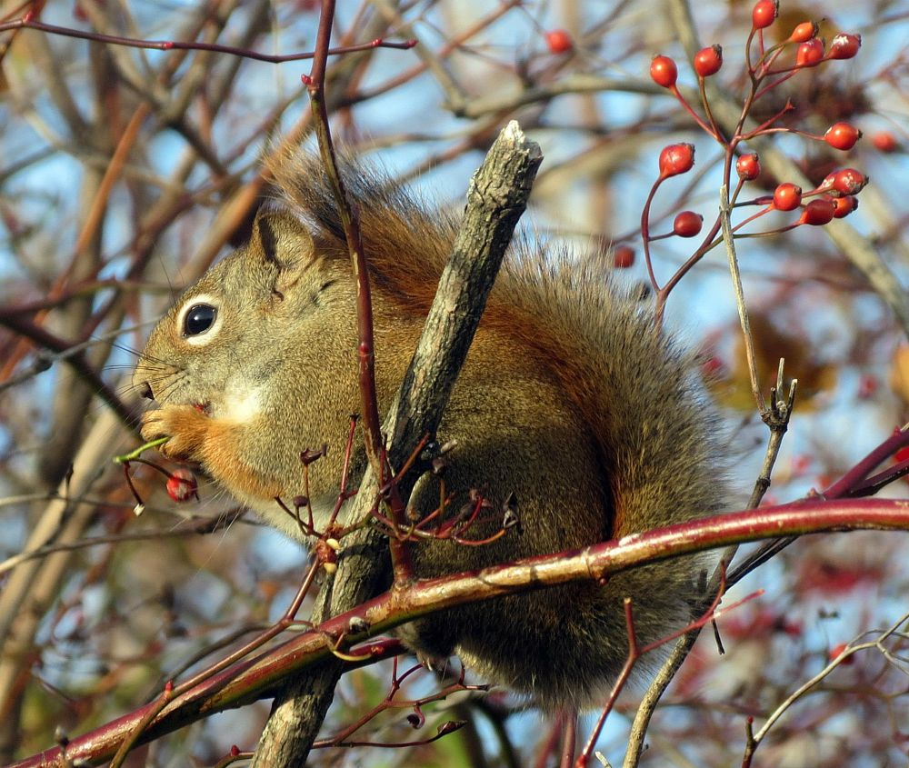 Photo in Animal #animal #squirrel #nature #wildlife #random