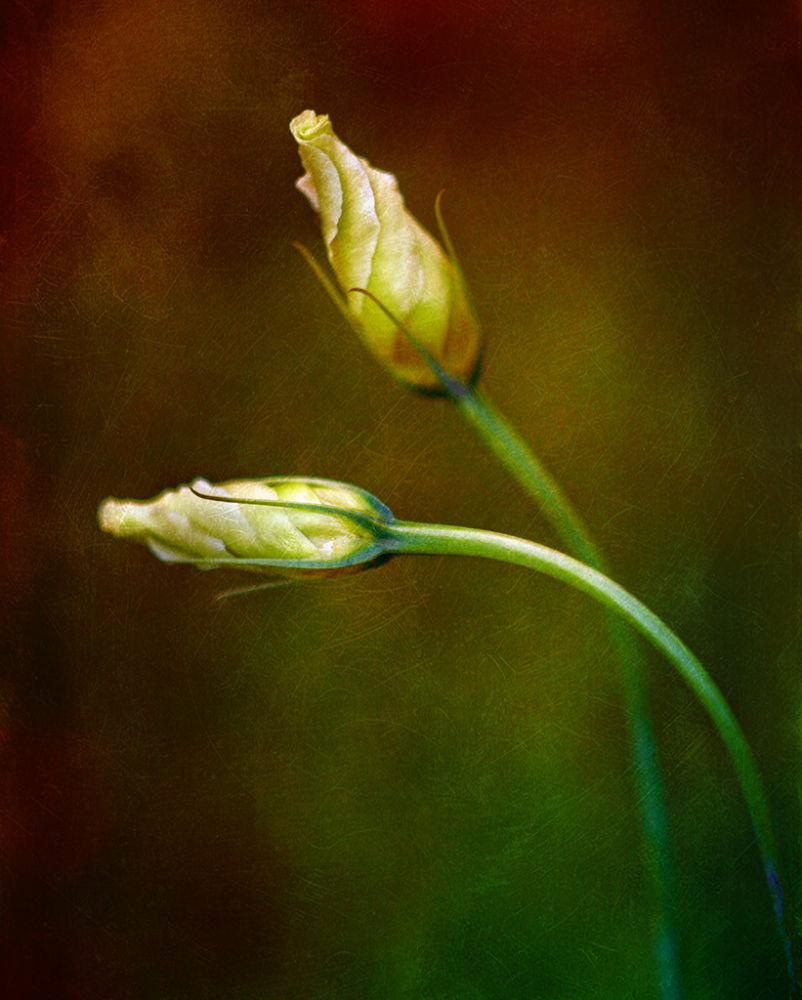 Photo in Fine Art #flower