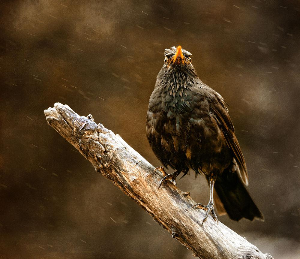 Photo in Random #blackbird