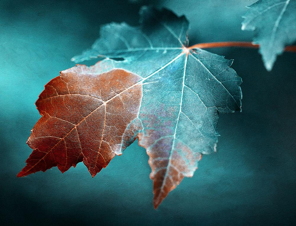 Photo in Fine Art #autumn