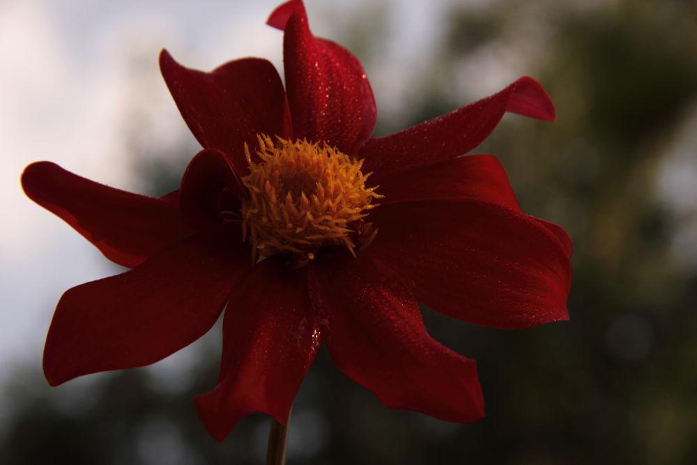 Photo in Nature #red #çiçek
