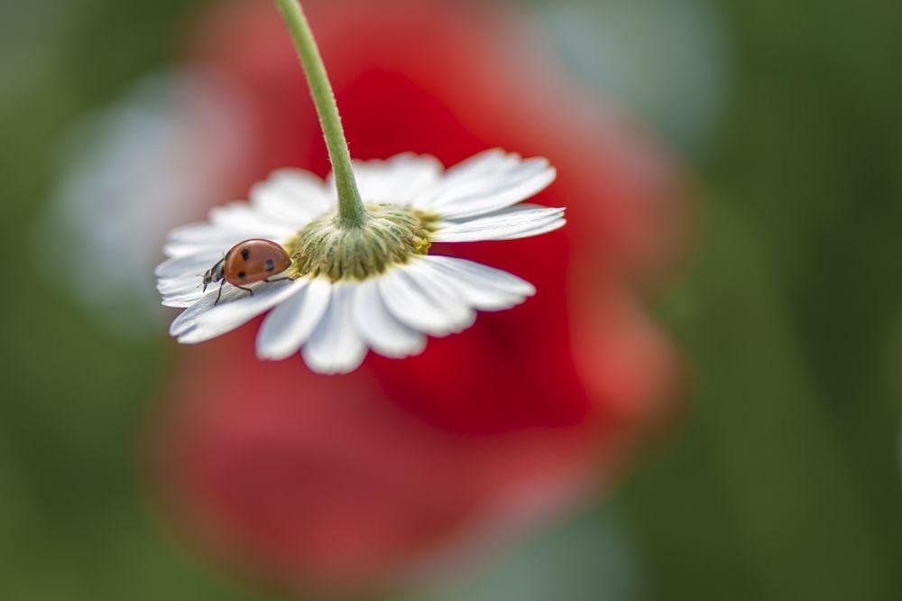 Photo in Macro #macro #ladybird #ireland #nikkor 105mm #nikon