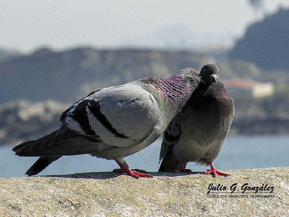 Photo in Animal #luanco #gozón #asturias #españa #spain