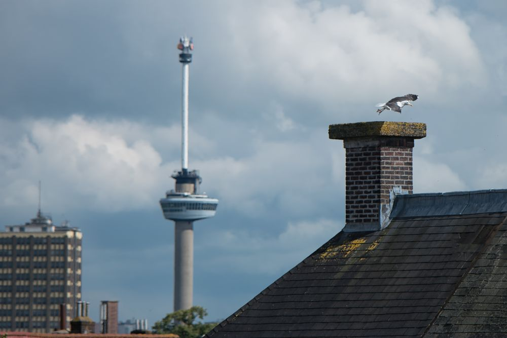 Photo in Urban #rotterdam #city #roofs #euromast #town #sea #seagull #capital #sky #clouds