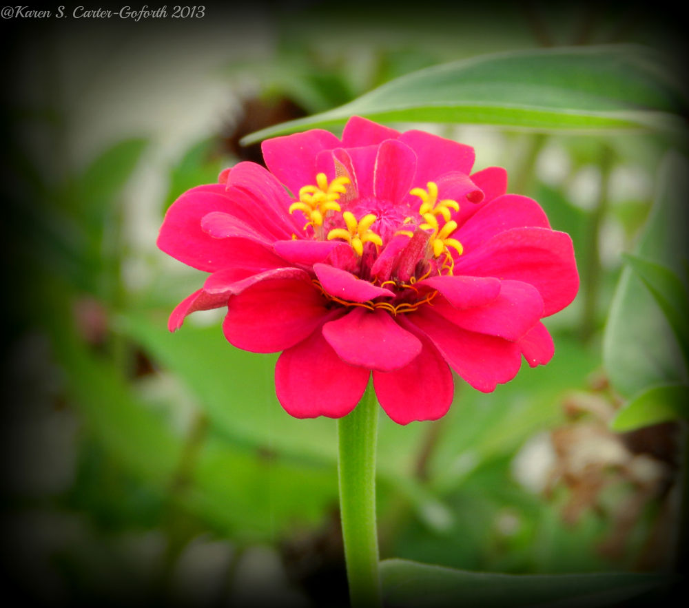 Photo in Nature #ypa2013 #flower #pink
