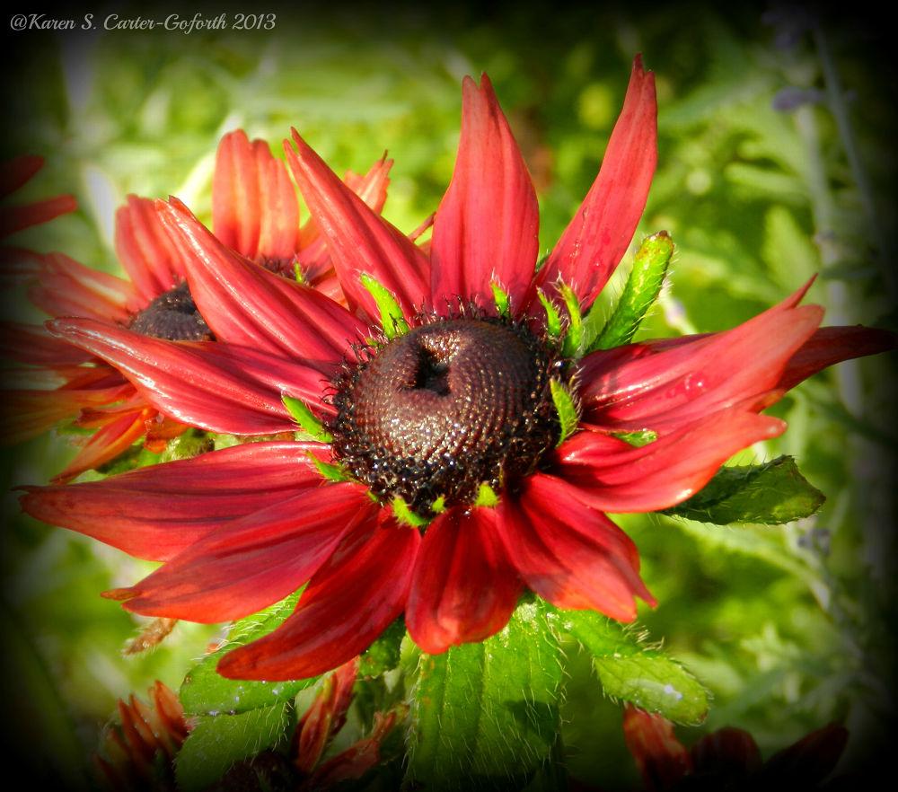 Photo in Random #flower #red #summer #ypa2013