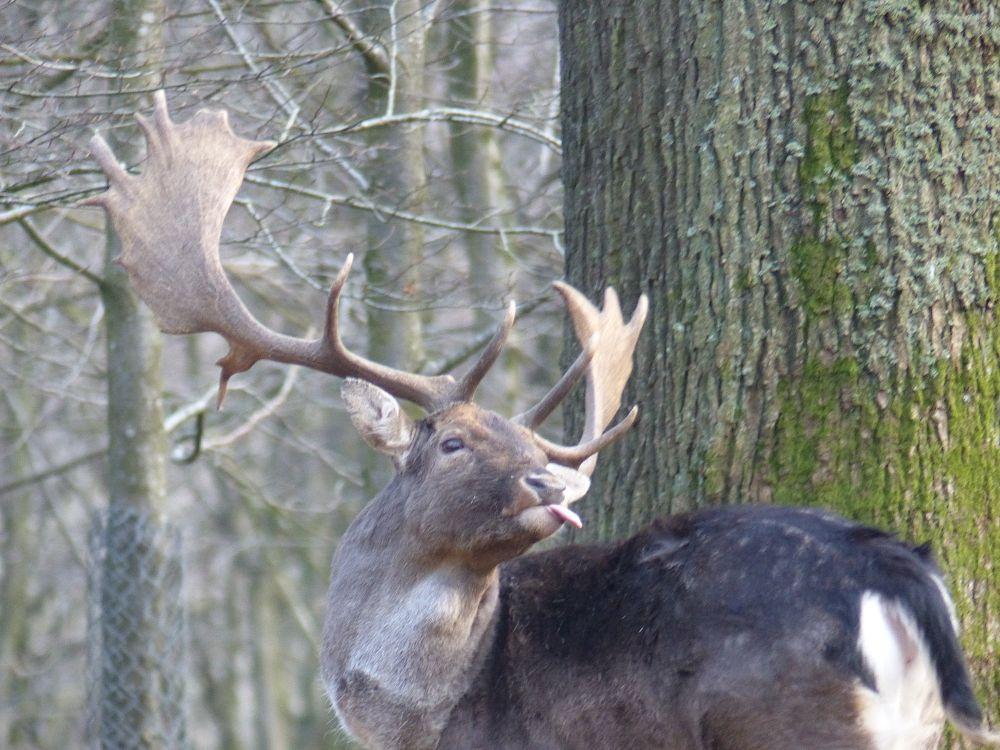 Photo in Animal #deer #antler #buck #forest #tree