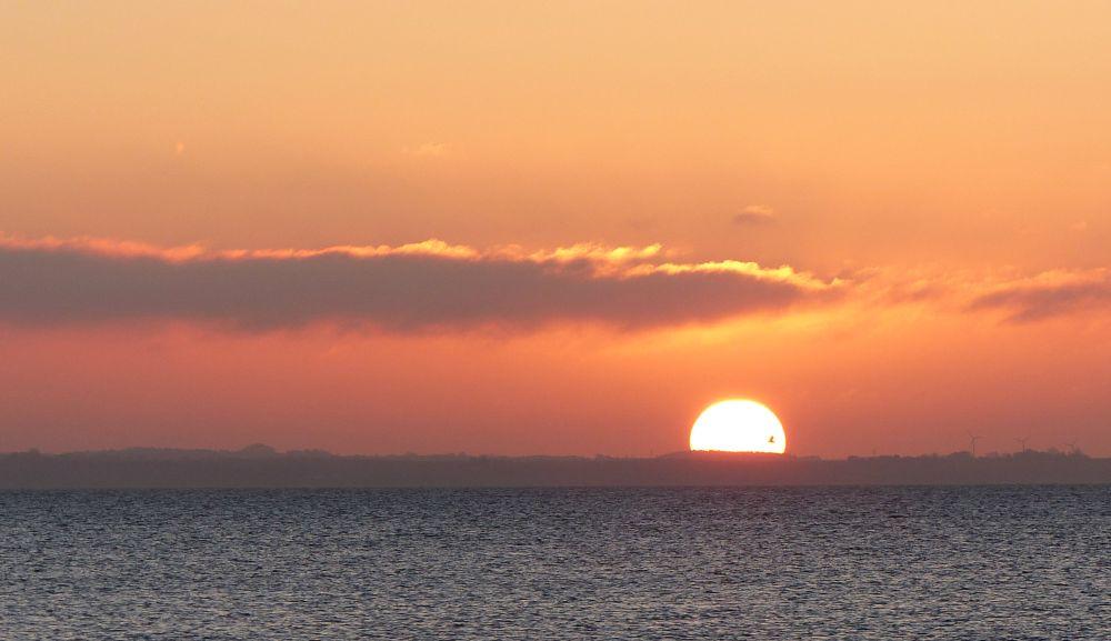 Photo in Sea and Sand #sunrise #sea gull #clouds