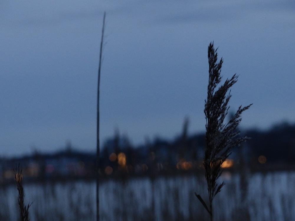 Photo in Sea and Sand #grass #night #fiord #water