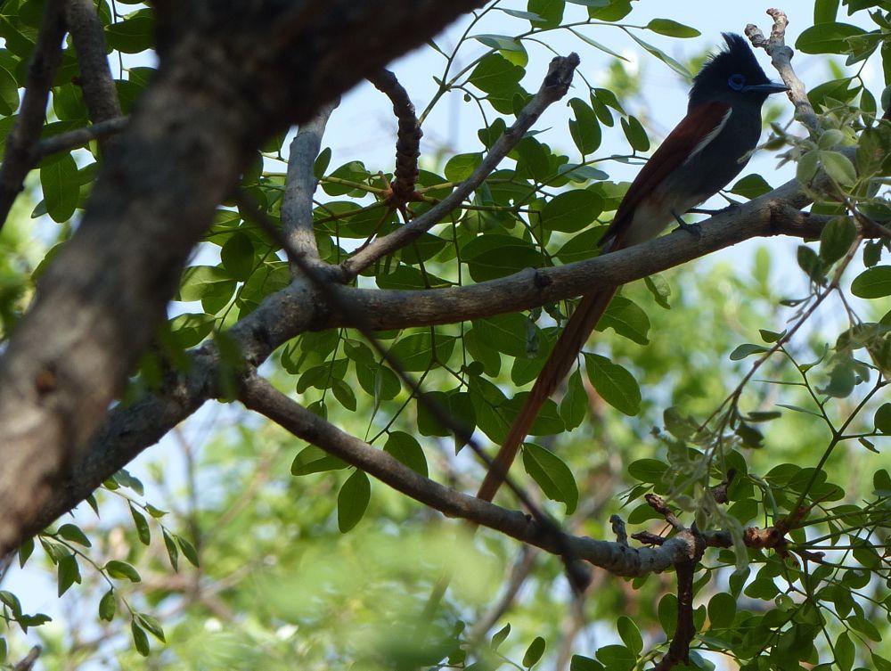 Photo in Animal #bird #tail #colour #tree