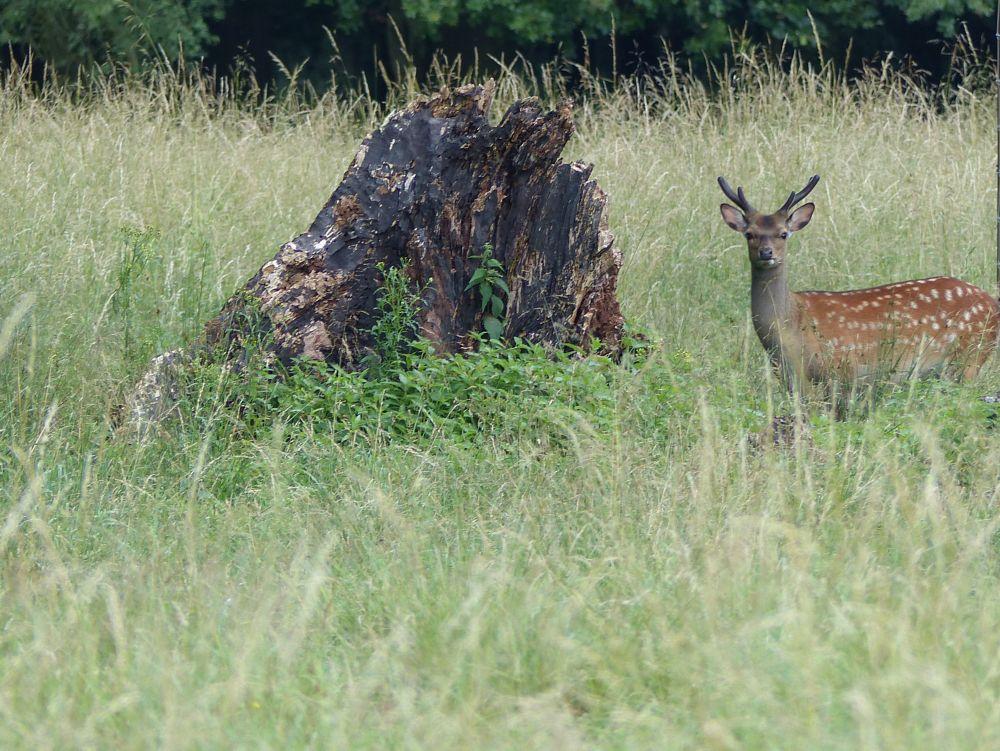 Photo in Animal #deer #anxious #stub #grass