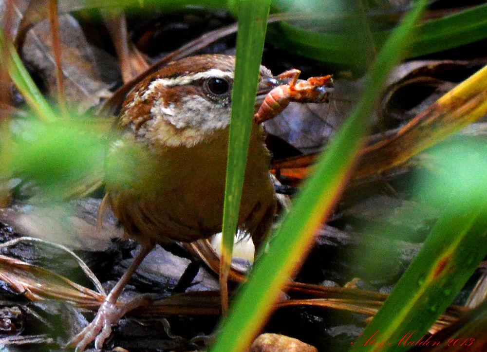 Photo in Nature #hunter #bird #nature #prey #garden