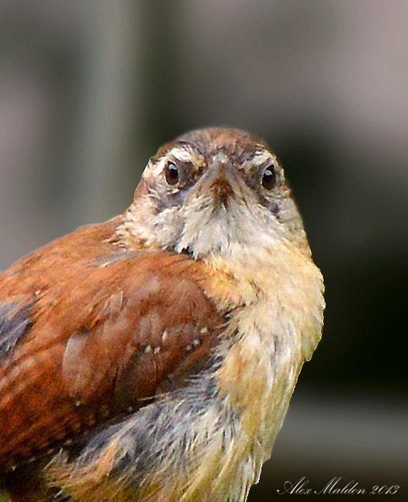 Photo in Nature #bird #baby bird #nature #garden