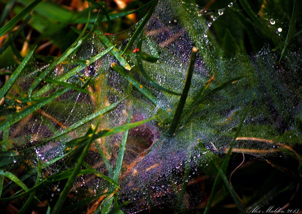 Photo in Nature #nature #dew #web #grass