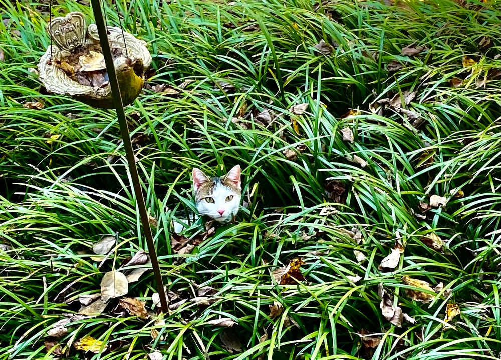 Photo in Animal #cat #nature #garden #grass