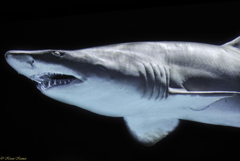 Photo in Random #shark