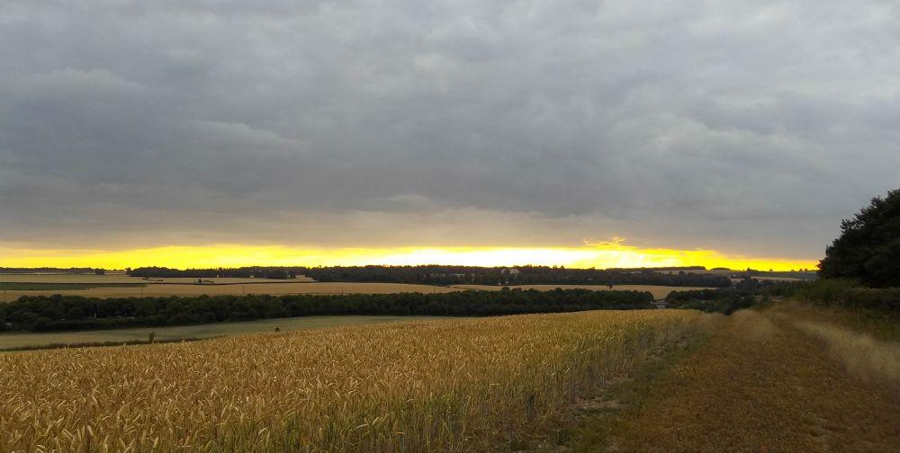 Photo in Landscape #field #sunset