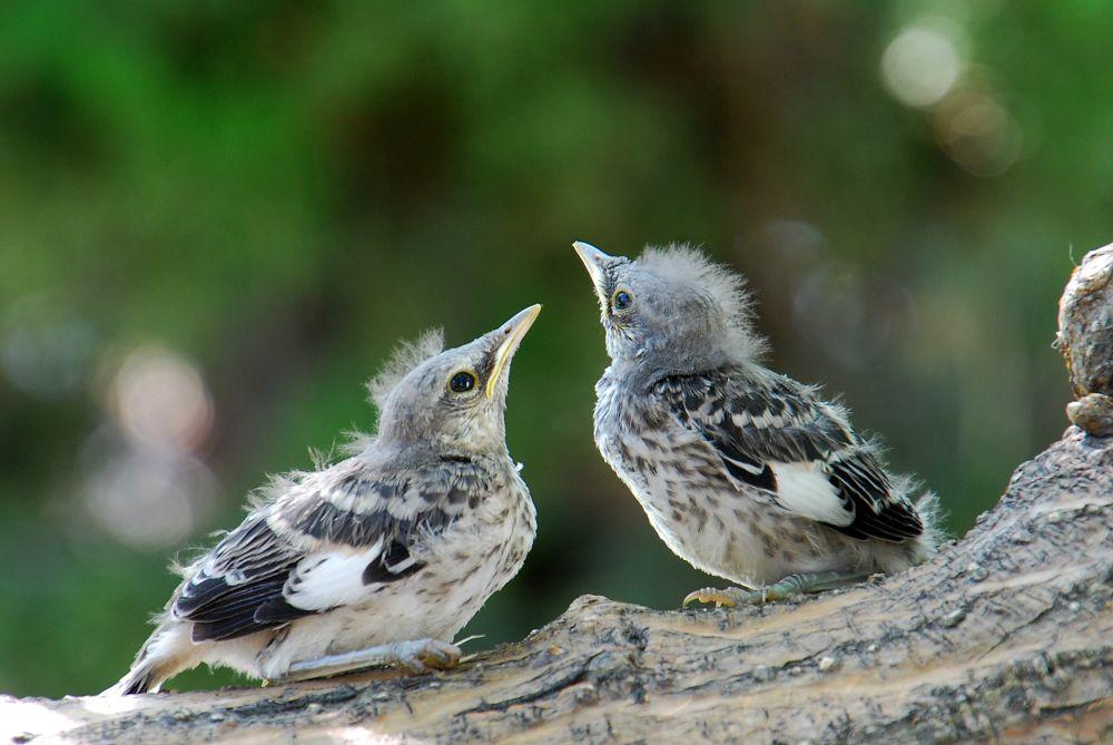 Photo in Animal #saseoche #wildlife #still baby #bird #nature #animal #waiting #couple #small