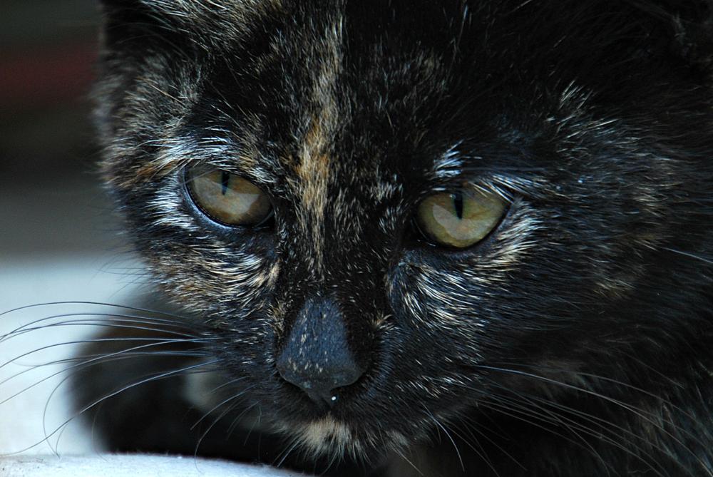 Photo in Animal #pet #animal #kitty
