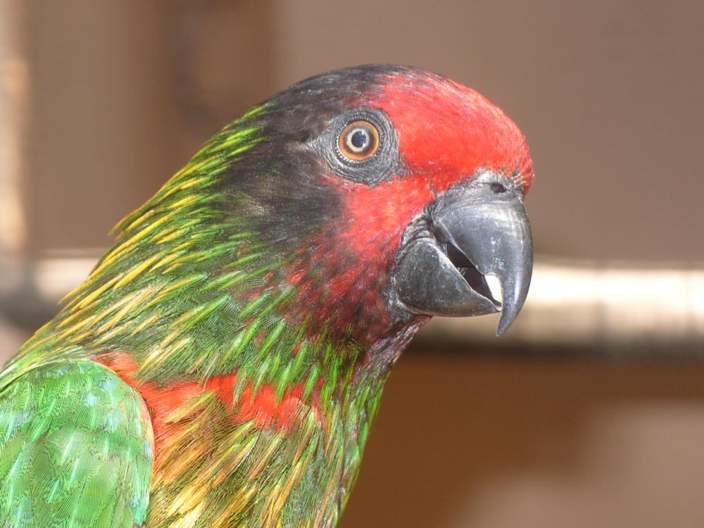 Photo in Animal #birds #animals #color #parrot