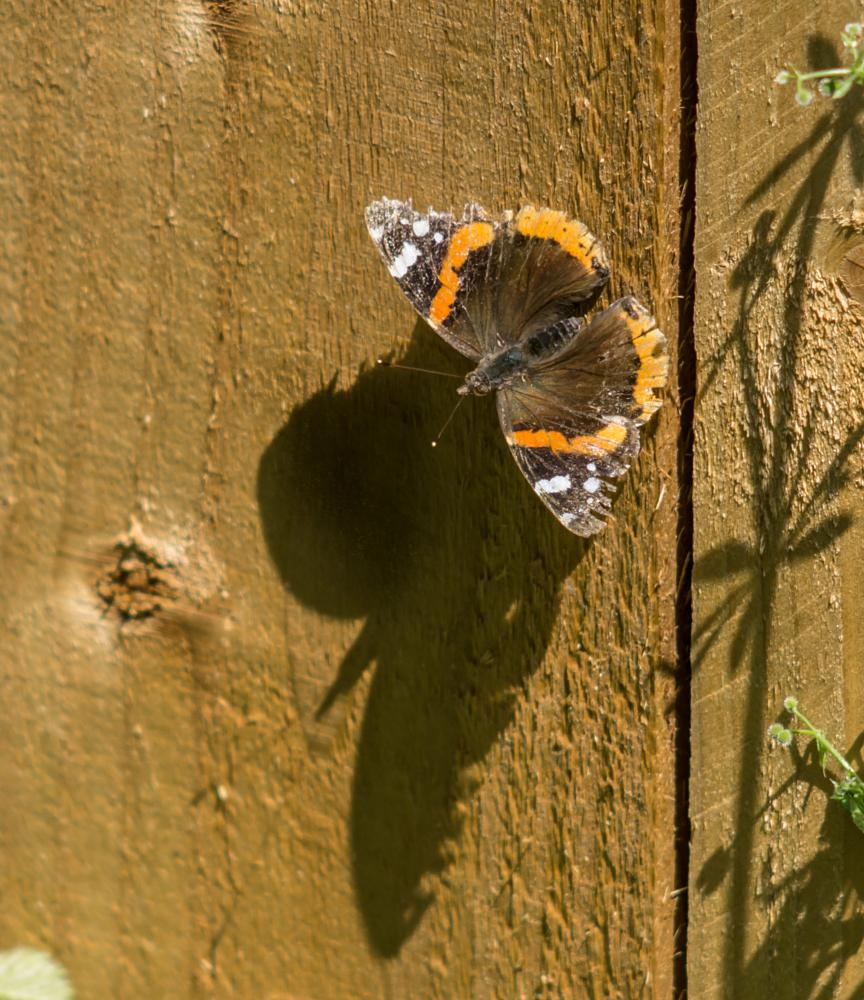 Photo in Nature #butterfly #nature #shadows