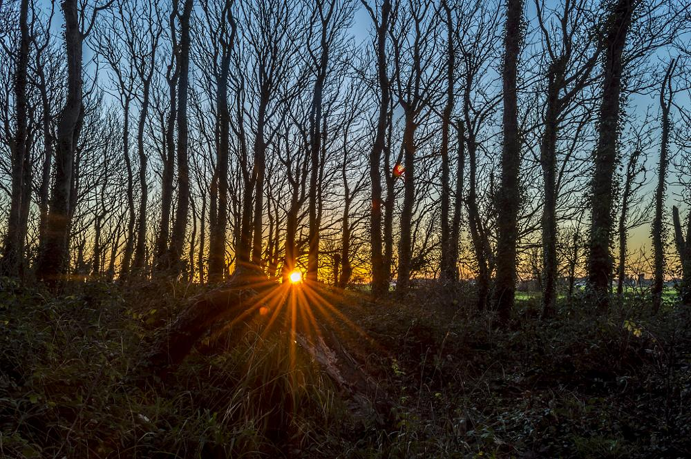 Photo in Landscape #sunset #winter #landscape #trees