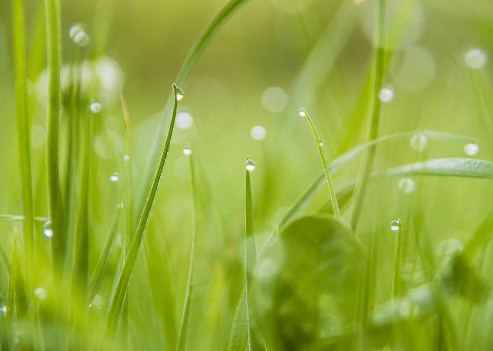 Photo in Random #wet #gras #morning