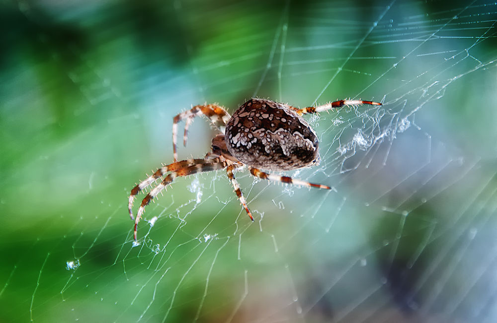 Photo in Macro #spider
