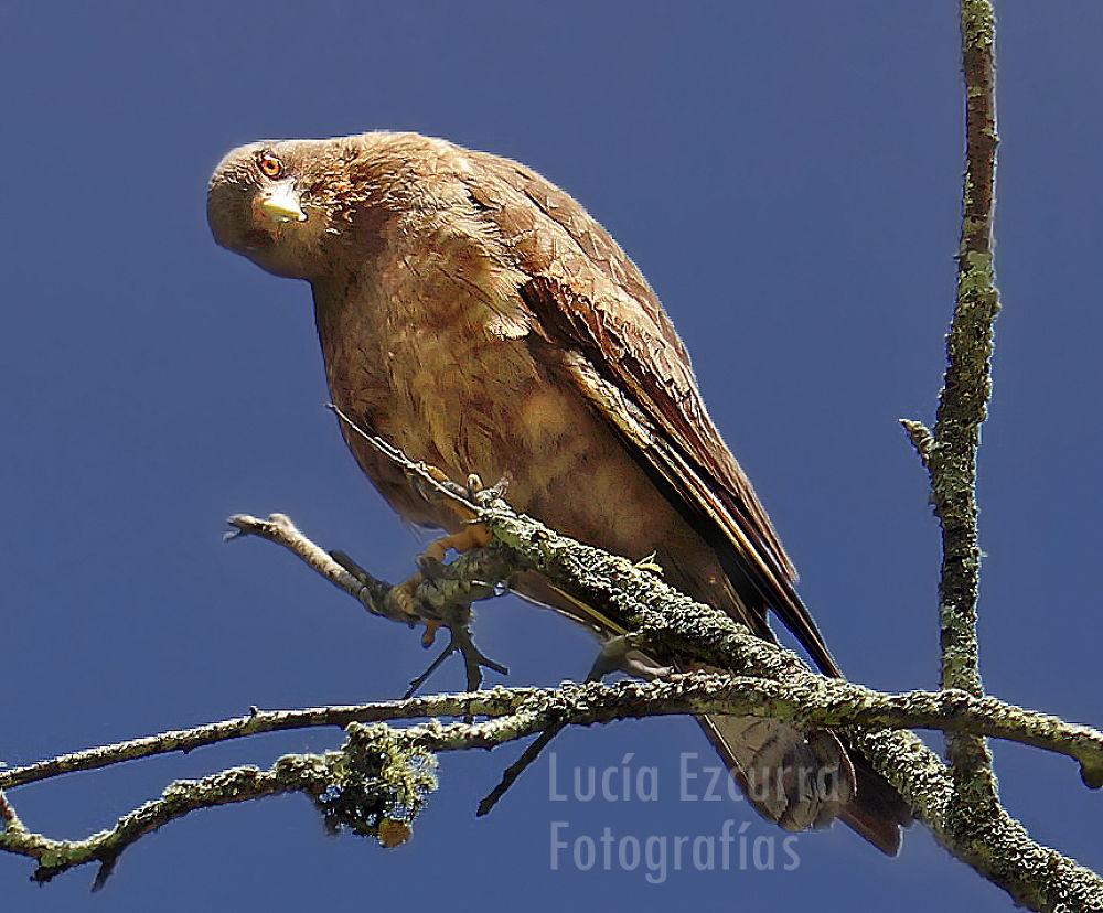 Photo in Animal #bird #sky #pagaro