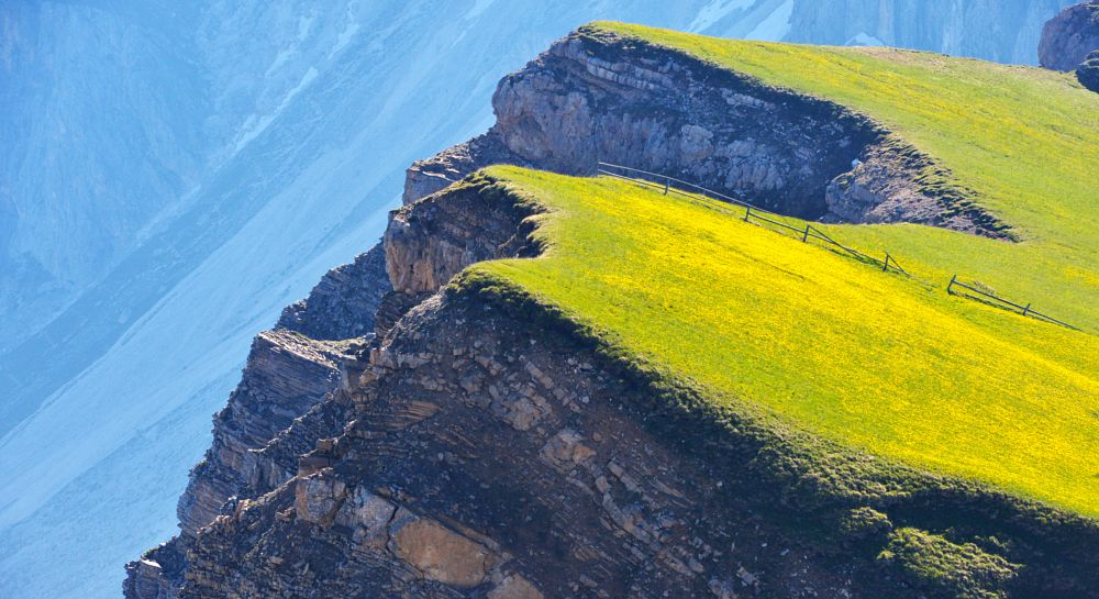 Photo in Nature #yellow #grass #green #dolomites #detailo #flowers #big #rock