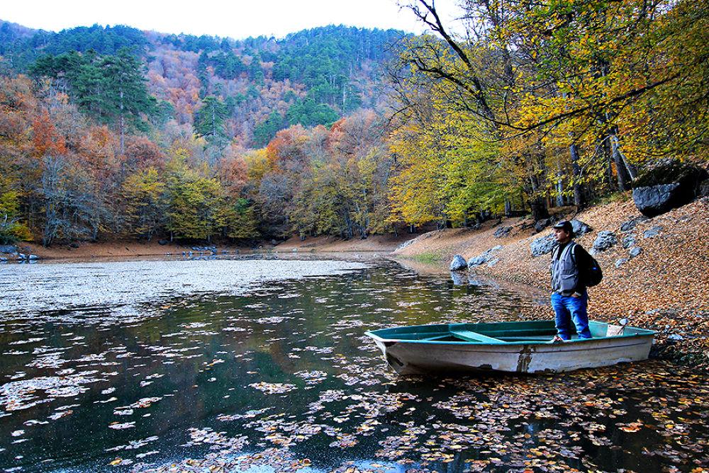 Photo in Random #yedigöller national park #nazlıgöl #bolu #turkey #türkiye #doğa