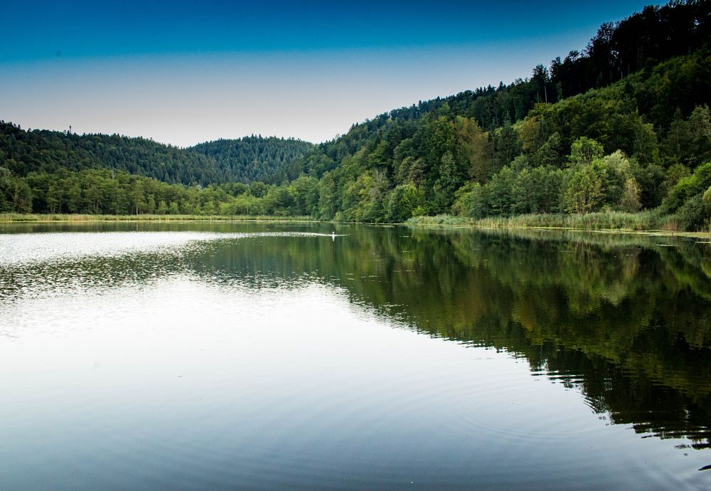 Photo in Nature #forest #lake #evening