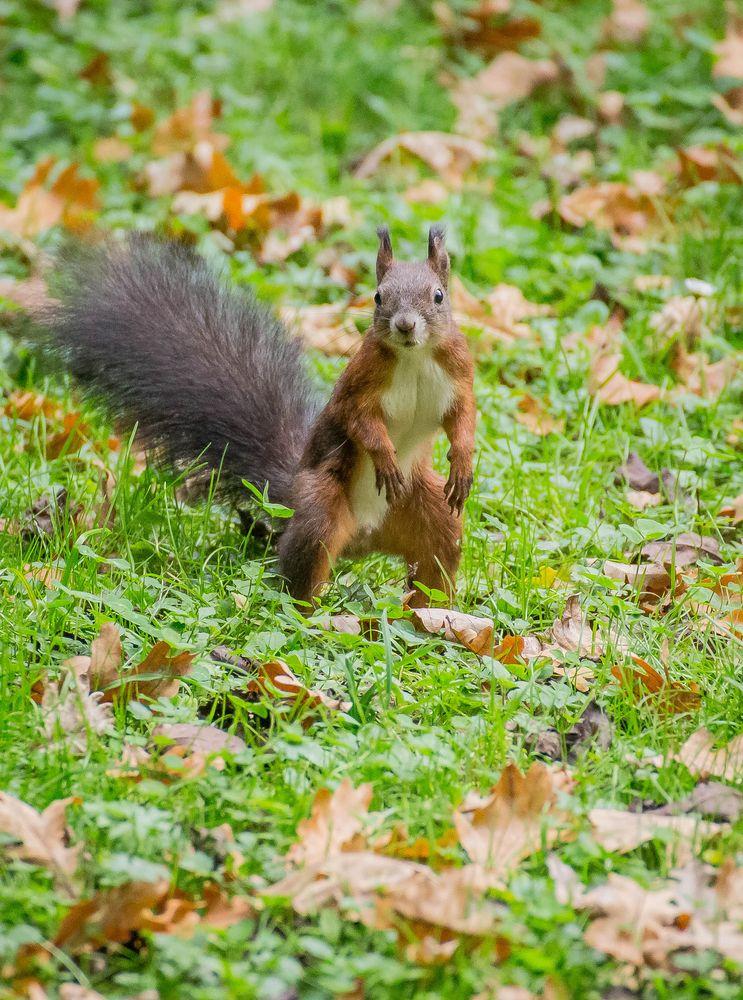 Photo in Animal #park #squirrel #autumn
