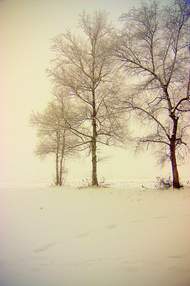 Photo in Nature #nature #landscape #fog