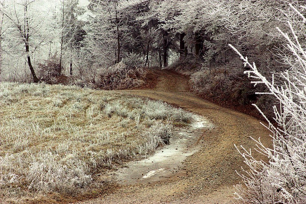 Photo in Nature #nature #frost #forest paths #ice