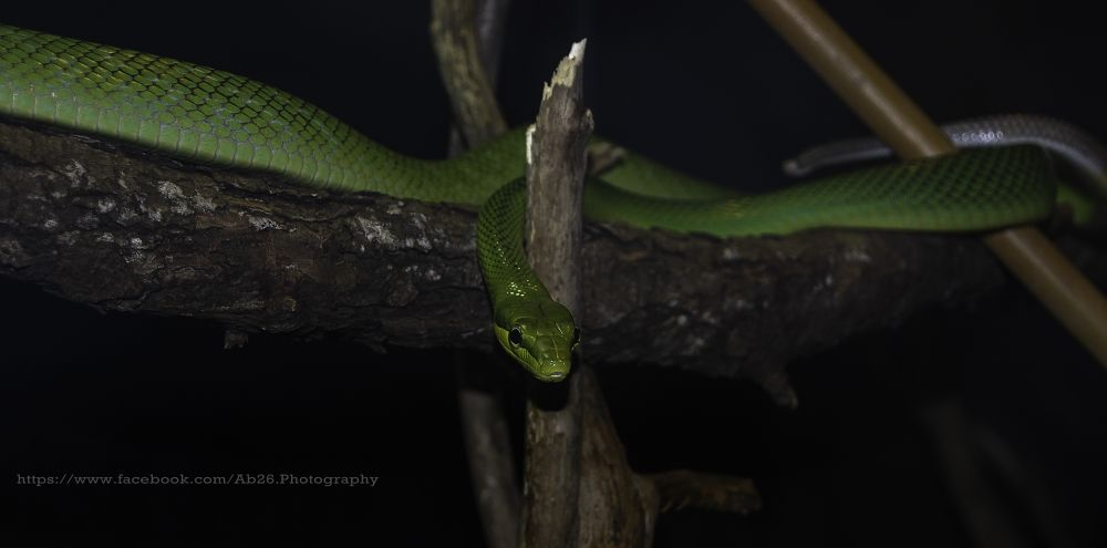Photo in Random #snake #nature #animal #zoo #toronto zoo #nikon #d40