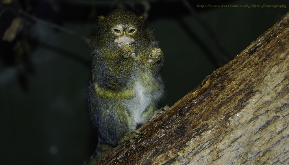 Photo in Animal #canon #powershot #s2 is #nature #animal #zoo #toronto zoo #toronto #canada