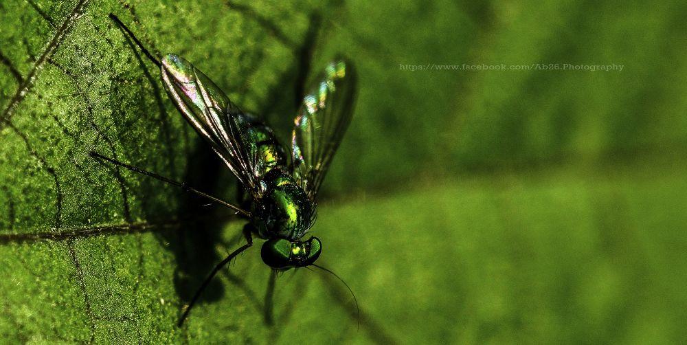 Photo in Macro #nikon #d5000 #macro #nature #india #wildlife #fly