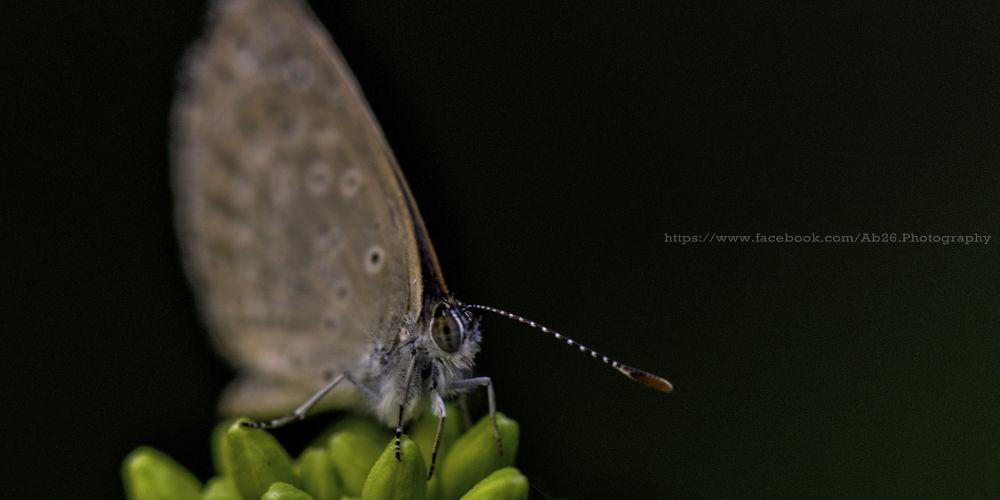 Photo in Animal #nikon #d5000 #macro #butterfly #nature #india #bihar
