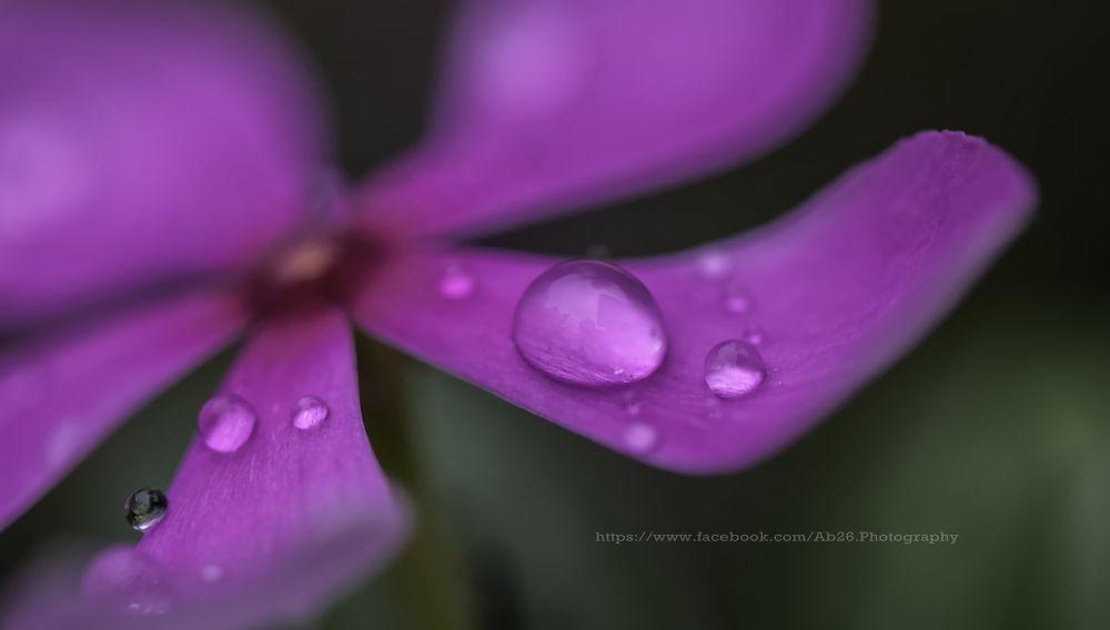 Photo in Nature #nikon #d5000 #flower #water #drop #macro #india #kolkata