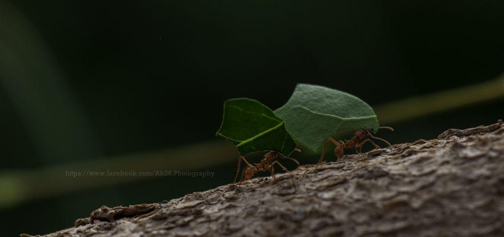 Photo in Nature #nikon #d5000 #ant #nature #wildlife #longleat #uk #safari