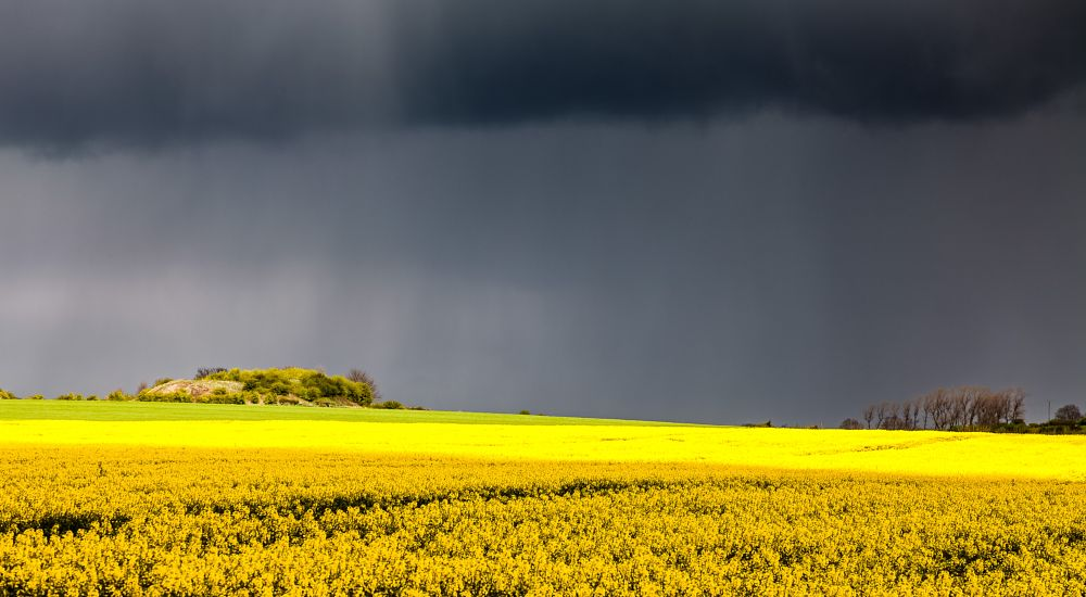 Photo in Nature #yellow #cloud #rain #landscape #flowers