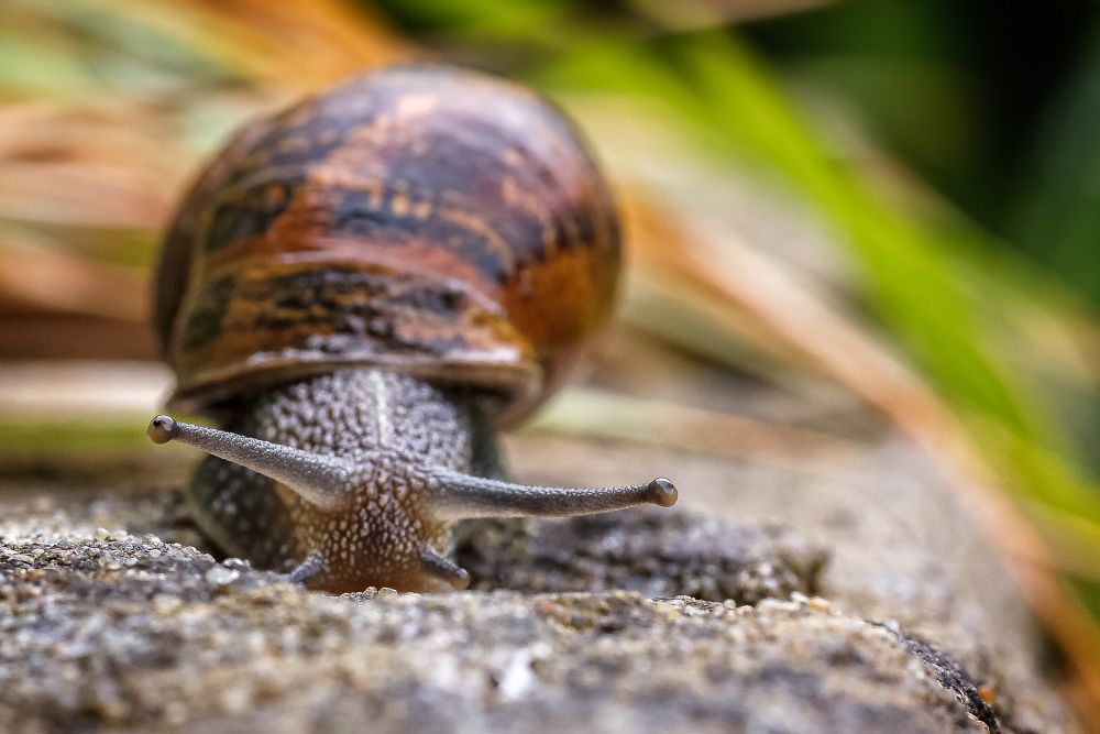 Photo in Macro #snail #shell #garden