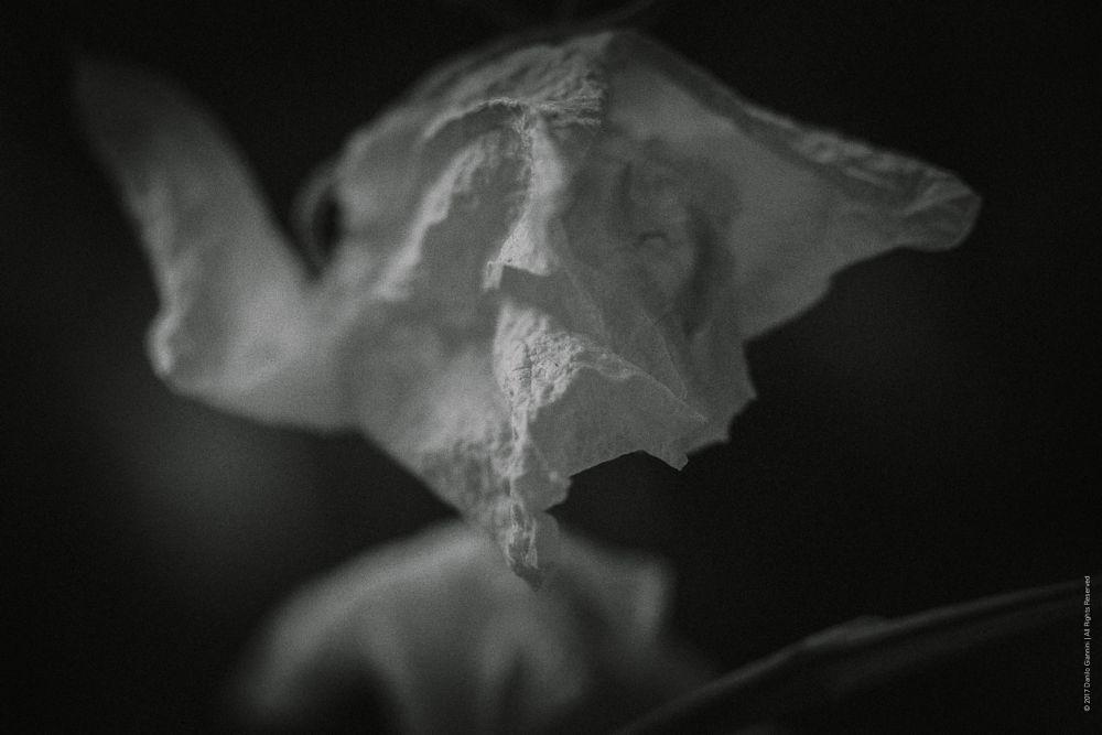 Photo in Macro #flowers & plants #art_photography #artphoto #artphotography #black and white #blackandwhite #blackandwhitephotography #bnw #bokeh #bokeh_world #bw_conversion_technique #closeup #composition #conceptualphotography #creative #dried #extreme_blackandwhite #fine art #fleurs #flower #flowers #fujix #fuji_series #fujifilm #macro #monochrome #natural light #natural_light #naturamorta
