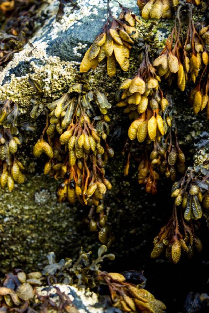 Photo in Underwater #seaweed #landscape #nature #close up #underwater