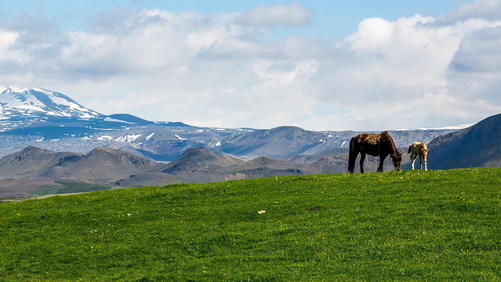 Photo in Landscape #hekla #iceland #horses