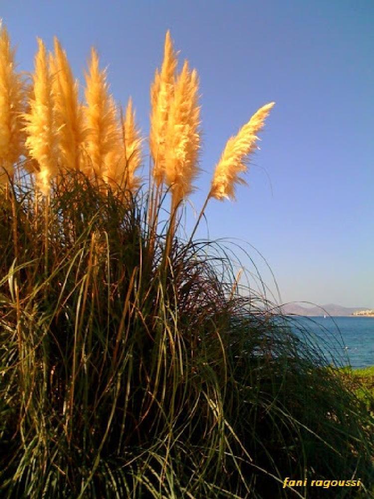 Photo in Random #reeds #summer #beach
